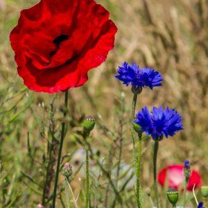 Image Spring