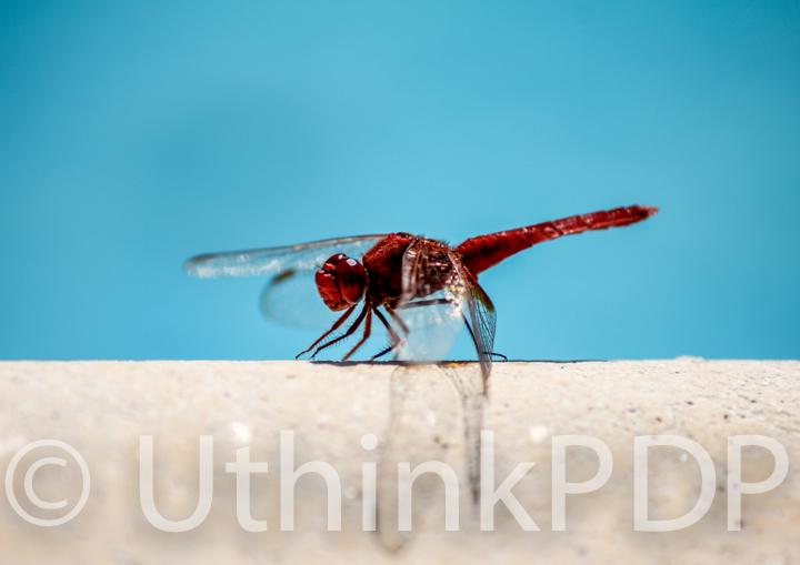 Image dragon fly